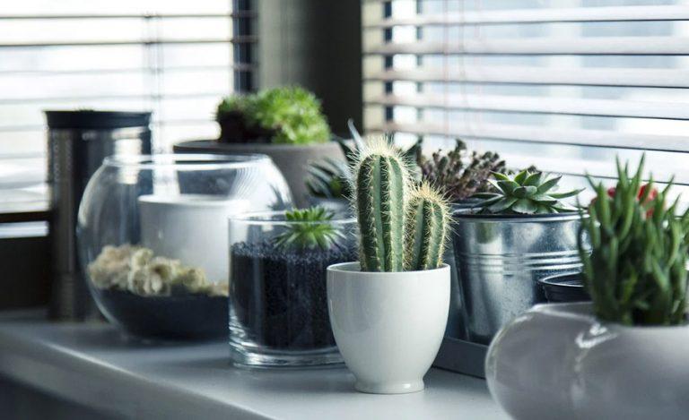 10 plantes d'intérieur belles et élégantes